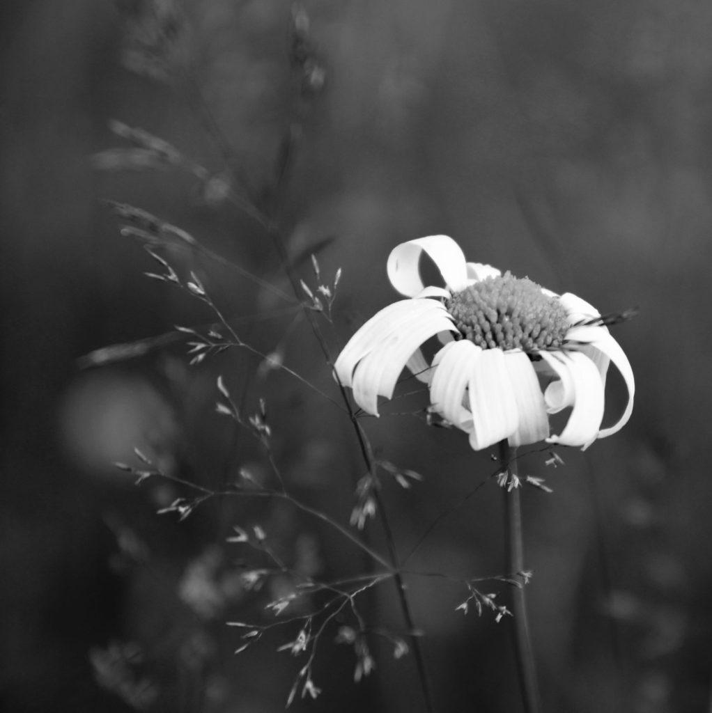 Foto: Janne Myhre Claassen/Nikon D7500